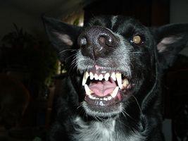 angry_dog.jpg