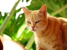 angry_cat.jpg