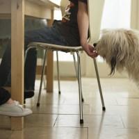 Köpeği Evde Besleme