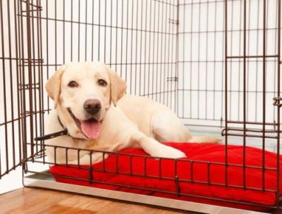 50 Best Wireless, Electric Dog Fence Systems 2018 - Pet ...