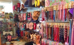 Dogs are always welcome to pop in and try our apparel on