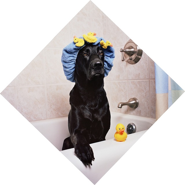 Custom Dog Shower Curtains