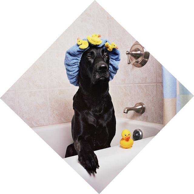 Custom Dog Shower Curtains
