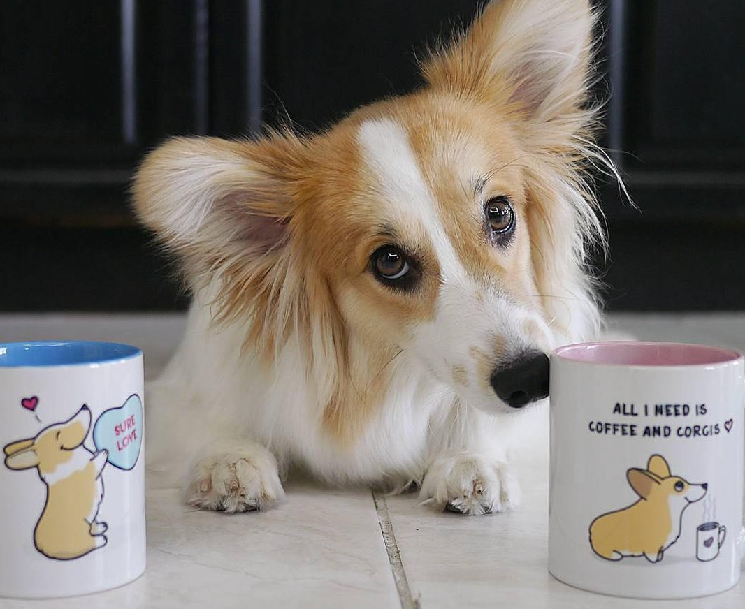 Best Corgi Mugs