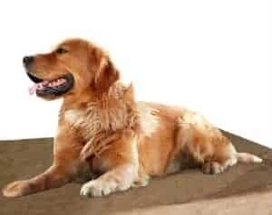 orthopedic-memory-foam-dog-bed
