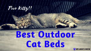 best-outdoor-cat-beds