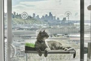 original-kitty-cot-worlds-best-cat-perch