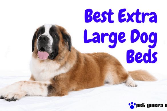 Best Extra Large Dog Beds