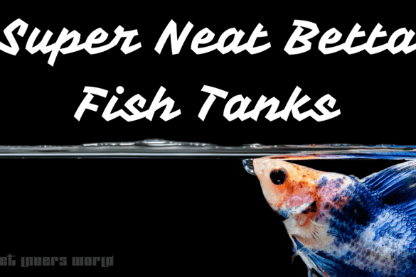 super-neat-betta-fish-tanks