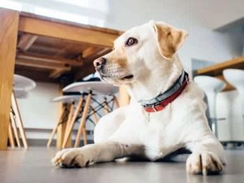 Animal Dog Pet Indoors