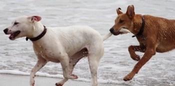 Dogs Batons Play Bite