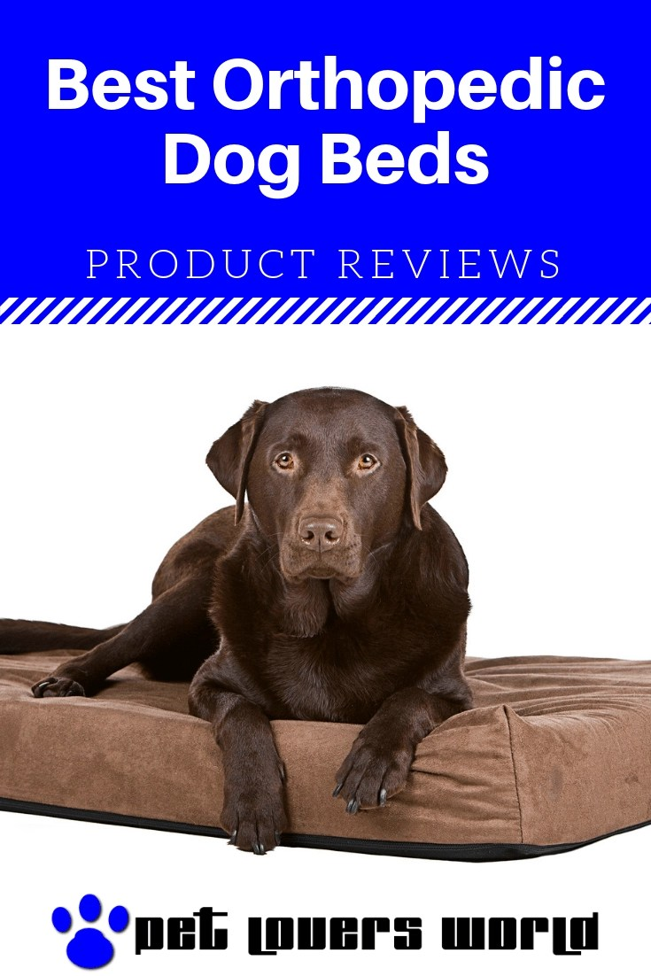 Best Orthopedic Dog Bed Reviews Pinterest Image