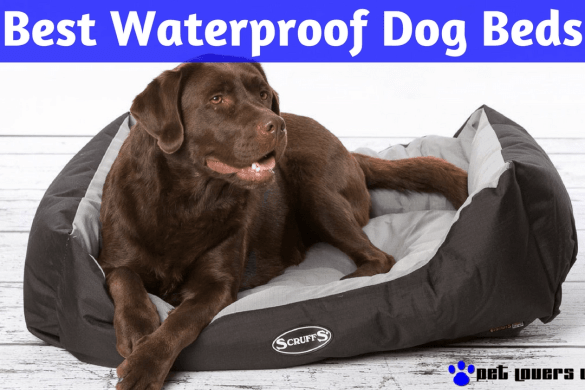 Best Waterproof Water Resistent Dog Beds