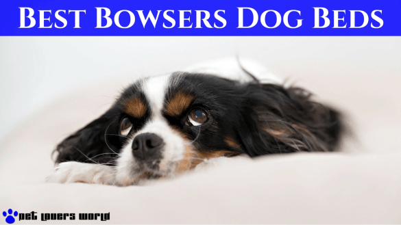 Best Bowsers Dog Beds Reviews