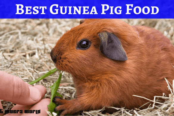Best Food For Guinea Pigs Reviews