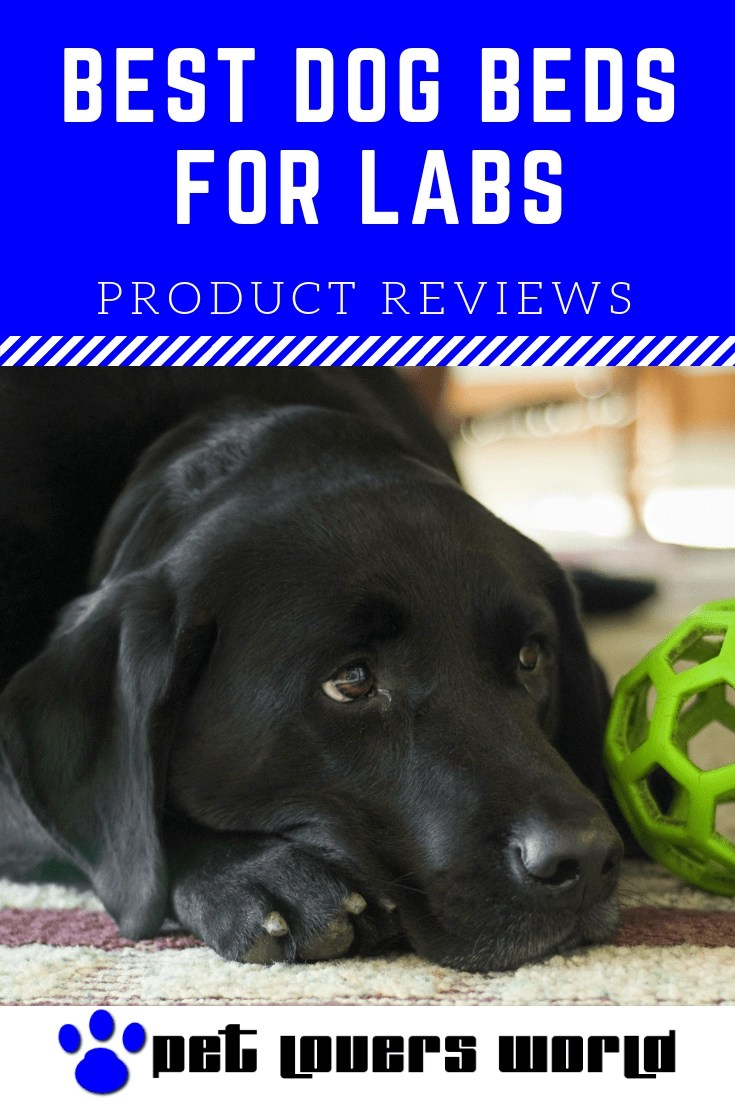 Best Dog Bed For Labs Reviews Pinterest Image