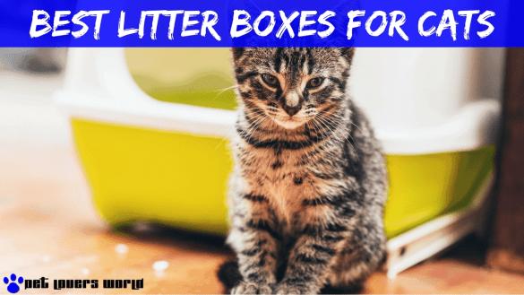 Best Litter Box For Cats Reviews