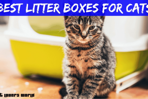 Best Litter Box For Cats Reviews