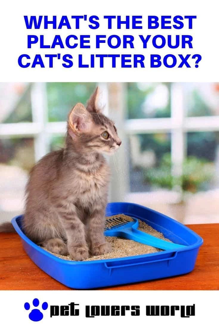 Best Place For Cat's Litter Box Pinterest Image