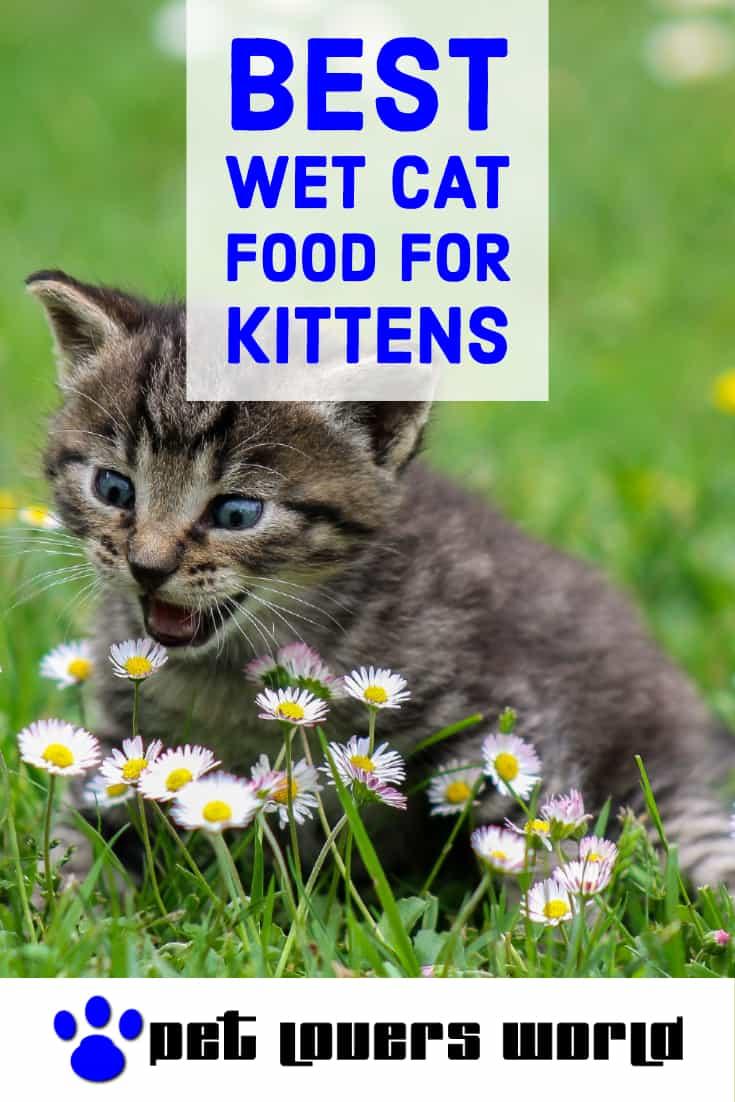 Best Wet Cat Food For Kittens Pinterest Image