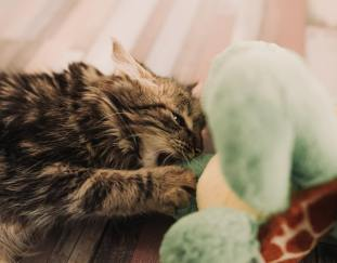 10-best-cat-toys-reviews-guide
