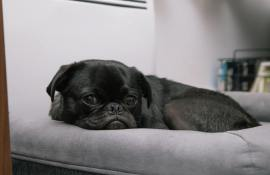 10-best-dog-beds-reviews-guide