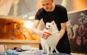 5-tips-to-make-dog-grooming-enjoyable