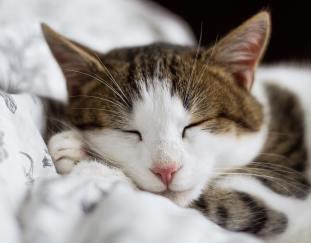 where-kittens-sleep