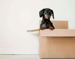 10-best-dog-crates-reviews-guide