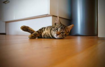10-best-wet-cat-foods-reviews-guide