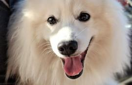3-best-dog-dna-test-kits-reviews-guide
