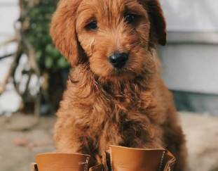 6-best-dog-boots-reviews-guide