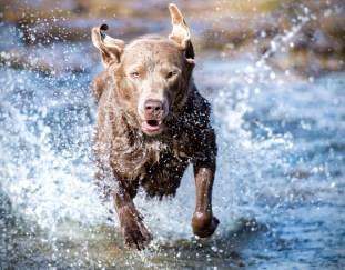 8-dog-with-webbed-feet