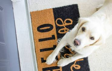 are-dog-doors-safe