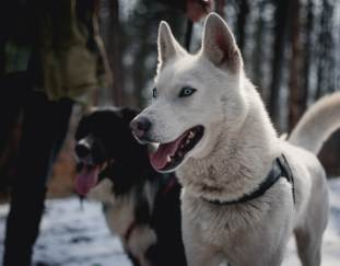 are-dogs-carnivores-or-omnivores