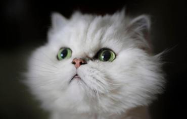 how-do-cats-mate