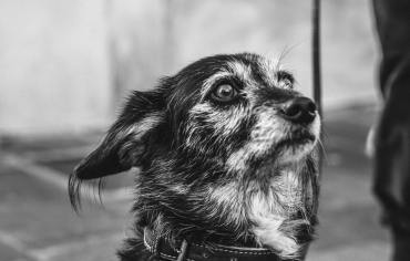 signs-of-dog-food-poisoning