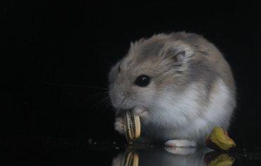 5-best-hamster-foods-treats-reviews-guide
