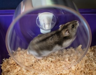 6-best-rated-hamster-wheels-reviews-guide