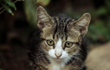 are-cats-lactose-intolerant