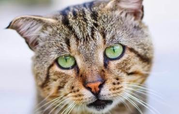 what-causes-cat-seizures