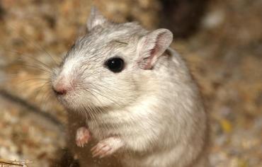 do-hamsters-sweat