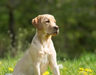 how-to-treat-dog-diarrhea
