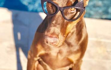 which-are-the-smartest-dogs-breeds