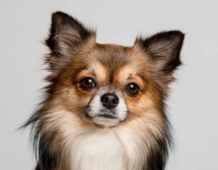 how-long-do-dogs-stay-in-heat