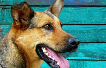 how-many-teeth-do-dogs-and-puppies-have