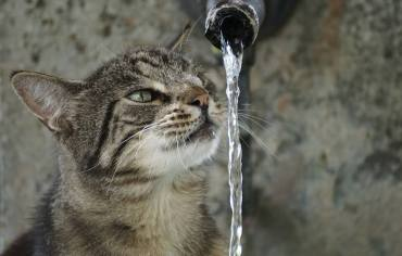 why-do-cats-hate-water