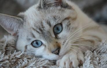 how-often-to-change-cat-litter-box
