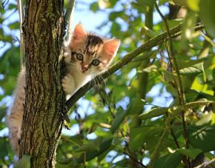 how-to-get-a-cat-out-of-a-tree