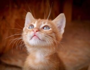 why-do-cats-drool